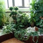 Cum alegem plantele de interior? Sugestii si idei