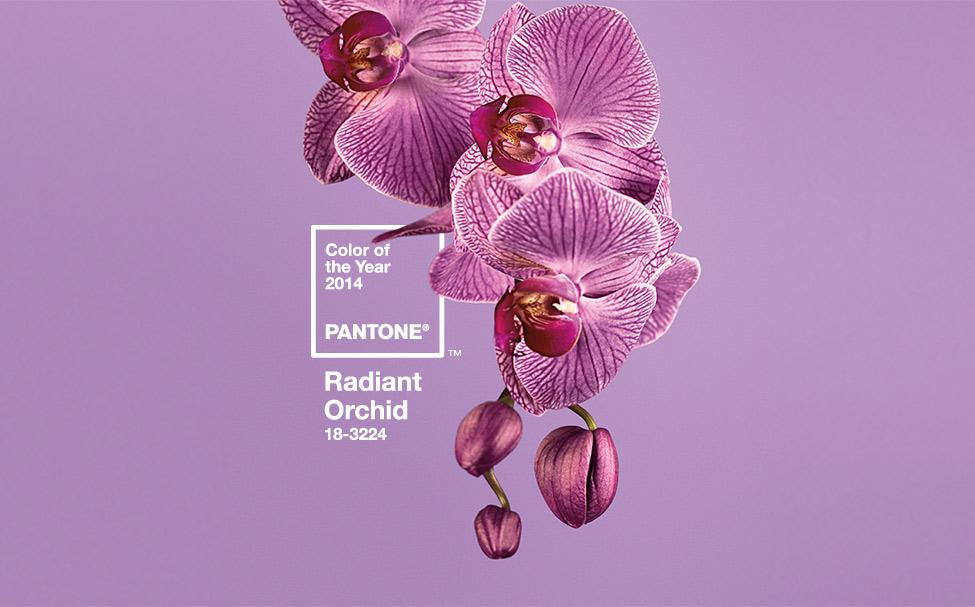 culoarea-anului-2014-radiant-orchid-lila (2)
