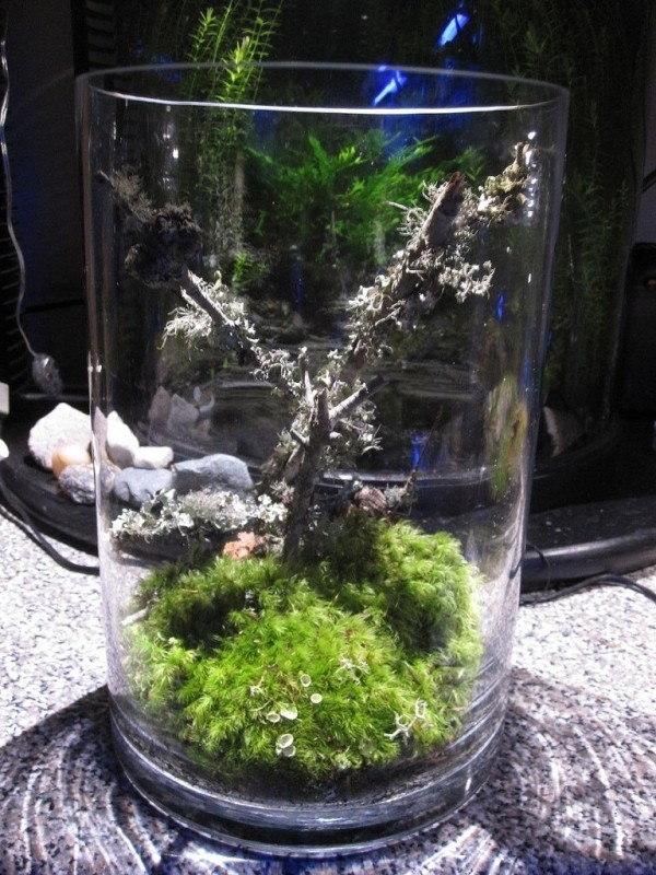 aranjament de flori cu licheni