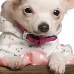 Custi personalizate pentru animale