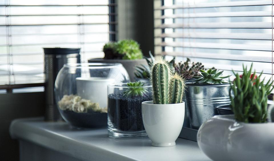 Plantele verzi de apartament -