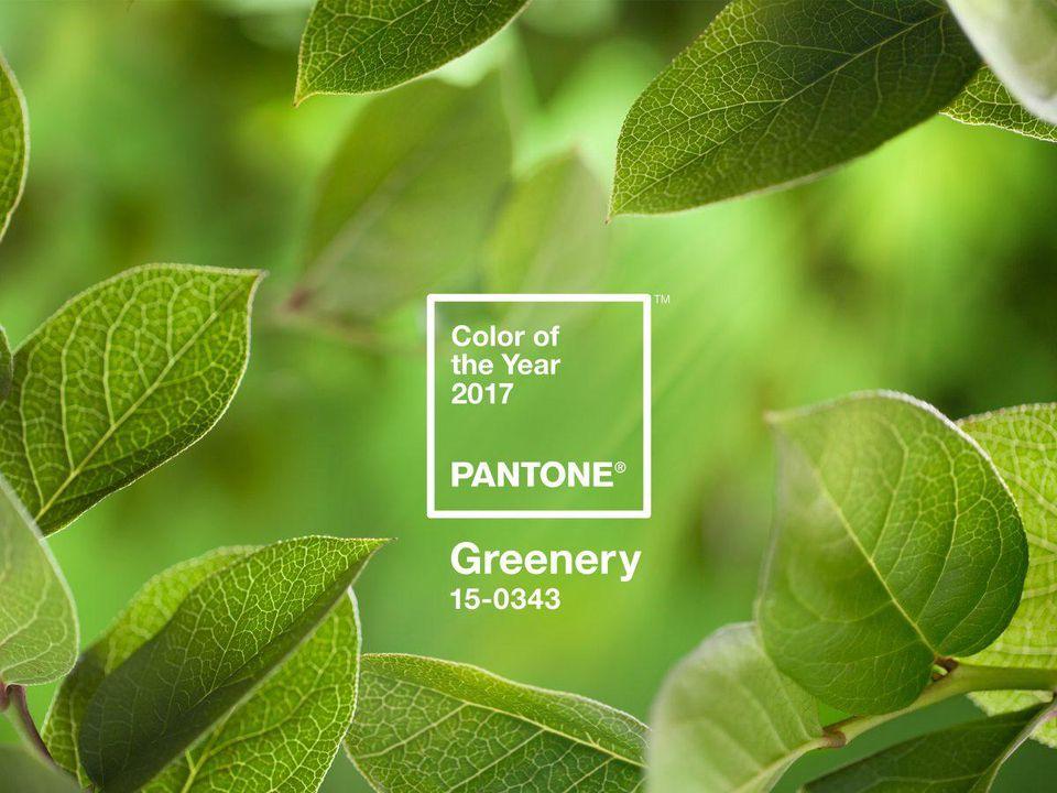 Culoarea anului 2017 – Verdele